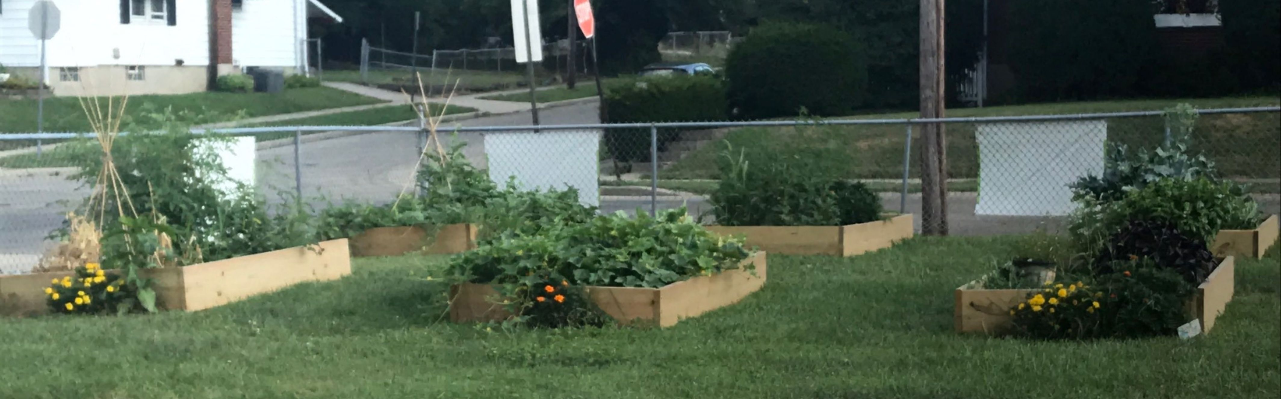 picture of land with raised garden beds